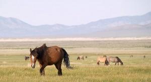Mustangs-de-la-reserva