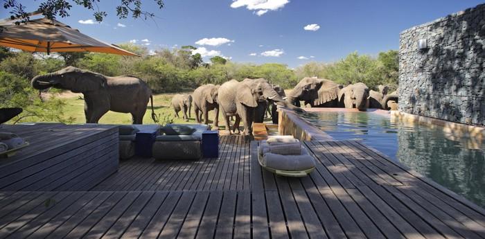 Un hotel con de elefantes en sud frica hoteles originales for Hotel luxury la rioja