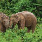 Excursiones con elefantes