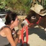 Actividades-con-animales